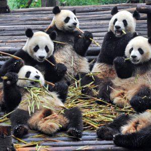Chengdu 成都