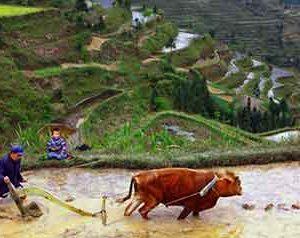 Guizhou 贵州