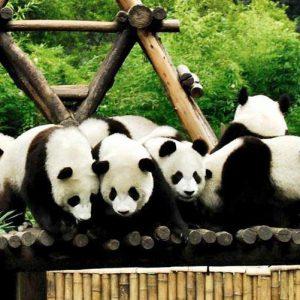 Bifengxia